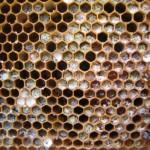 Moldy pollen