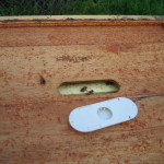 Bee escape is placed over the hole in the inner cover...