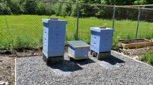 Three hives!